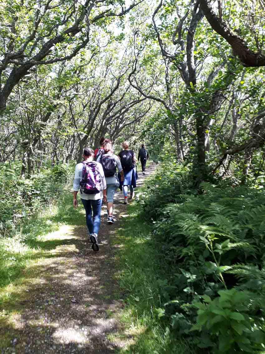 Wandern auf Sylt im Wald