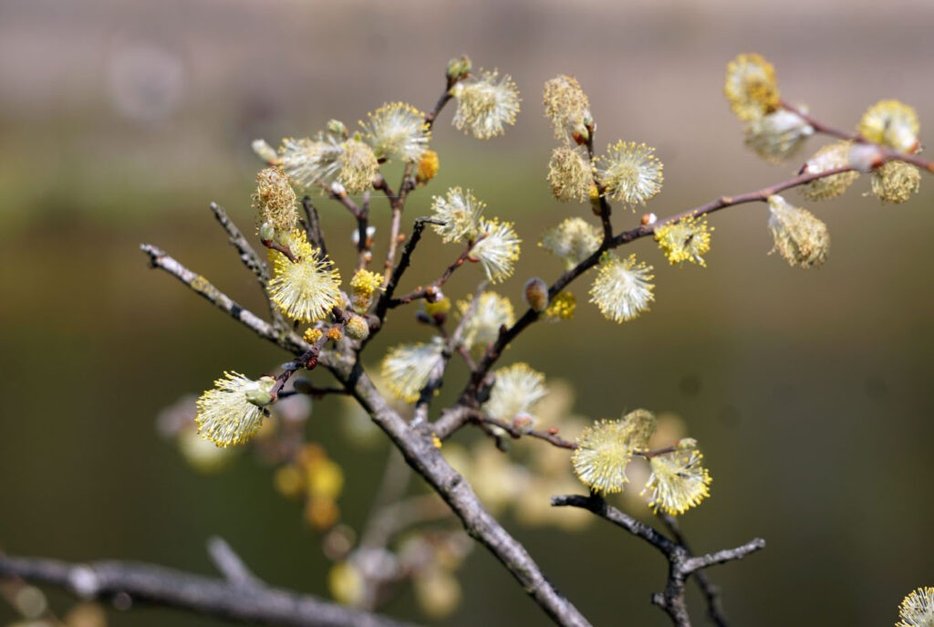 gelbe Blüte Blume in der Natur
