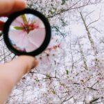 fokus linse